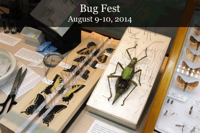 bugfest