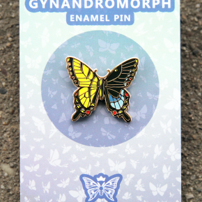 Tiger Swallowtail Gynandromorph Pin