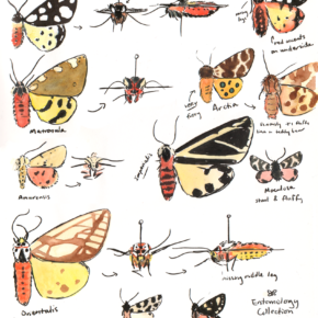 Tiger Moths Study