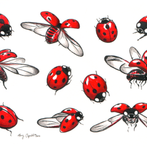 Ladybugs Study